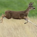 Se graba en bicicleta y se estrella contra un ciervo