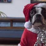 No te pierdas al perro de Santa Claus montado en una aspiradora