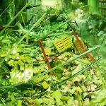 Un simple golpecito es suficiente para destrozar un almacén gracias al efecto dominó